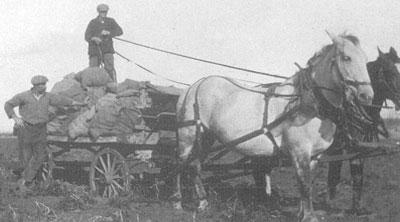 Working on the Prins' Farm, circa 1938 - Photo courtesy Prins Family